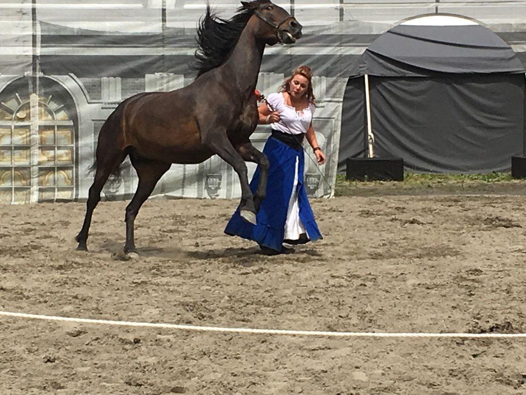 La Belle et son cheval